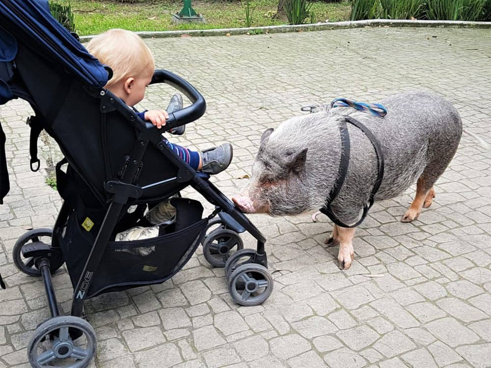 toddler in stroller with pig