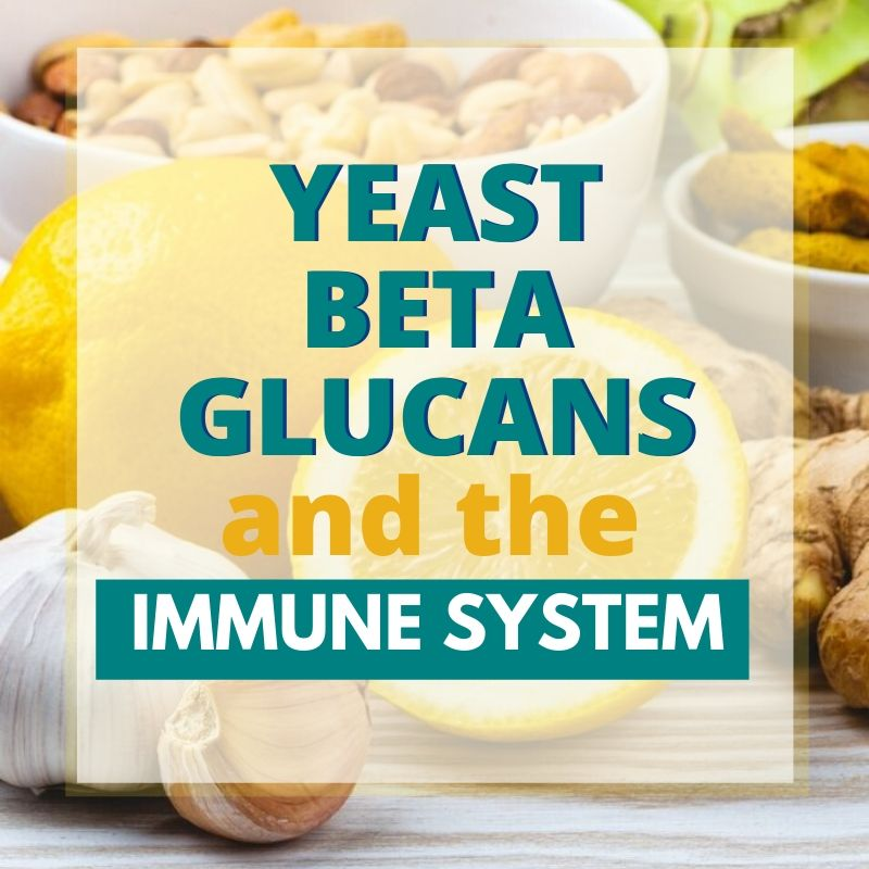 yeast beta glucans graphic