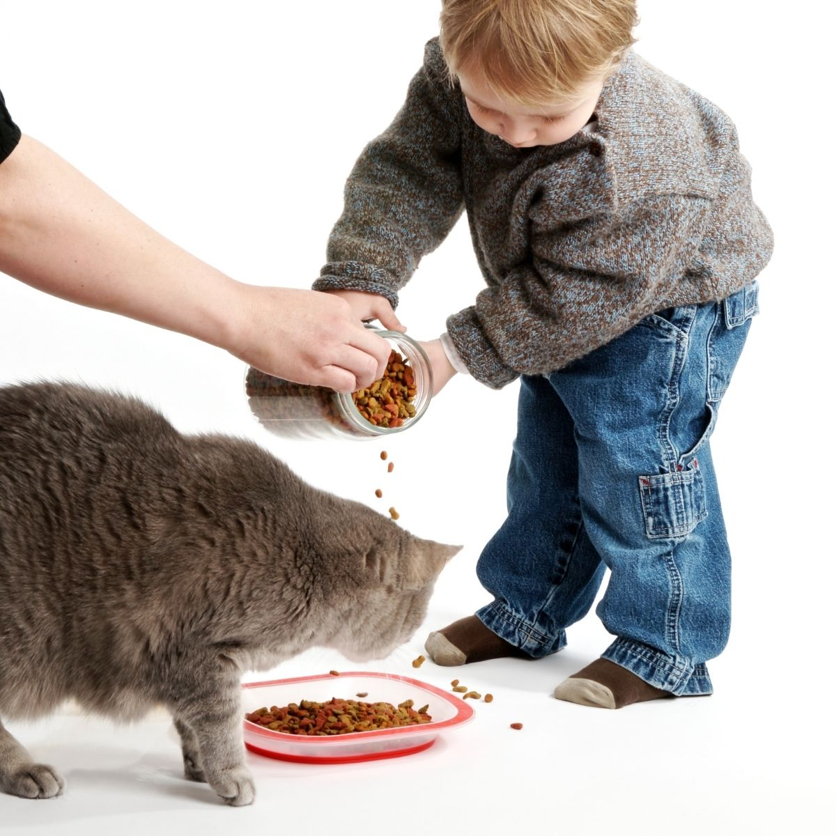 toddler helping feed cat